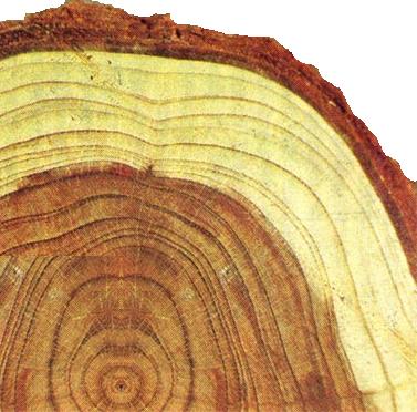 Свойства, определяющие внешний вид древесины.
