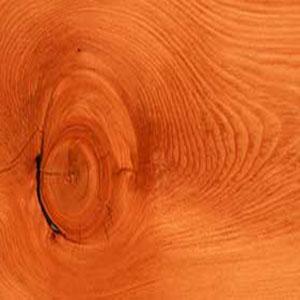 Сучки в древесине
