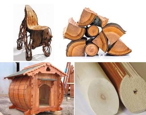 Породы древесины применение